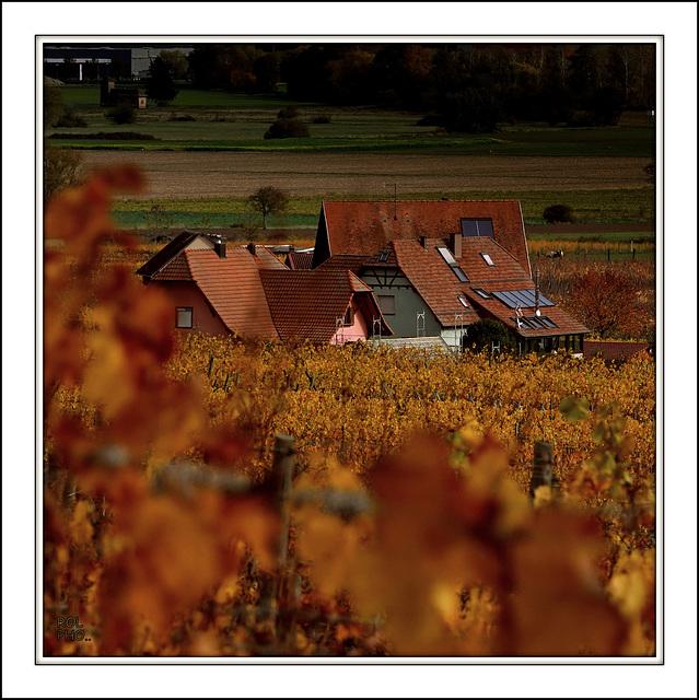 Toitures Alsaciennes aux couleurs de l'Automne