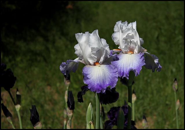 Sixtine C  chez Iris 26