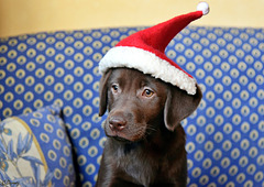 Le cadeau de Noël de notre fils !