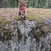 Bubo on a precipice