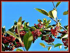 Berry Branch.