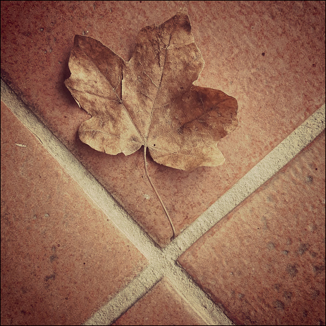 Autumnal joints. Herbst Fuge.