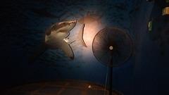 Ventilateur géant pour poissons thaïlandais / Thai aquarium huge fan