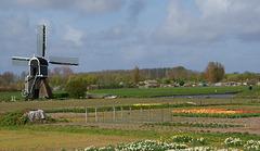 Windmühle bei Noordwijk