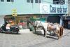 Guatemala, Casa Verde Tours for Horseback riding around the Lake of Atitlan