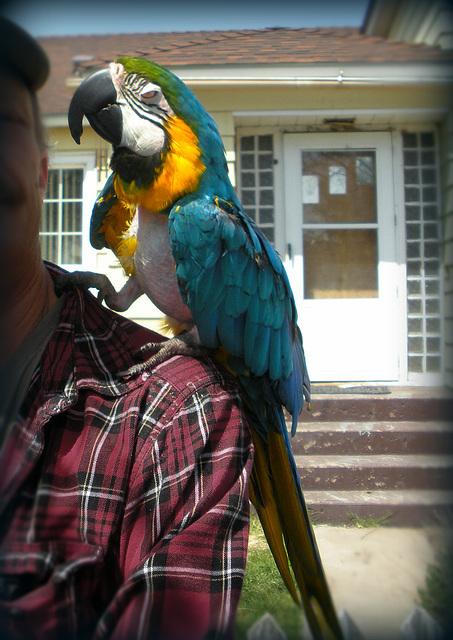Big Bird is 25 years old