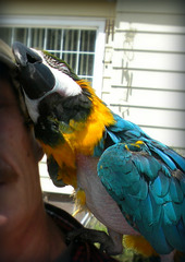 Big Bird's hat attack
