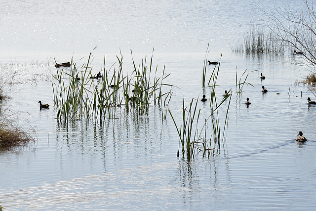 Birds and Reeds
