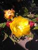 Flor de un cactus