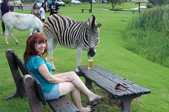 A Zebra Tries to Steal My Beer!