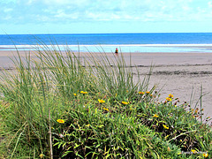 Beach Scape.