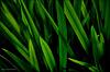 Whispering Grass ...