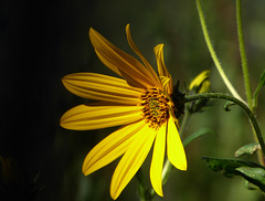 fiori d'autunno