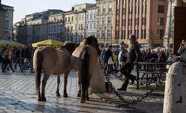 Poland, Krakow Rynek Główny  (#2434)