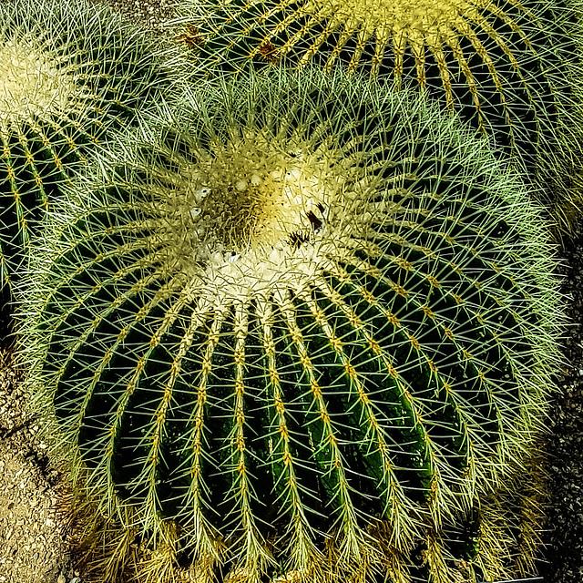 Prickly plants at Kew Gardens