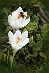 Free bee.....