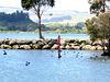 Lake Rotorua Wildlife.