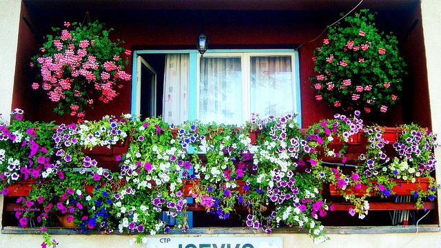 FLORAL ACCOMMODATION : SPC 11/2017 - 5° place - Balcony of welcome