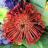 FLEUR INCONNUE / UNKOWN FLOWER