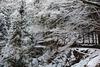 Japan, Winter Forest in Jigokudani Yaen-Kōen Snow Monkey Park