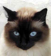 Ah ces yeux / Ah those eyes !!
