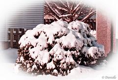 Chapeau de neige….