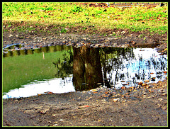 Puddle Picture.