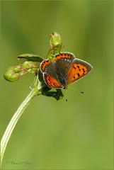 Verlangend naar vrolijke zomerse Vlindertjes...