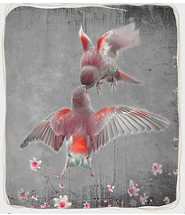 Winged-love