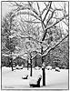 Drei Bänke im Schnee