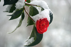 Quand l'hiver et le printemps semblent se côtoyer / When winter and spring seem to mix with each other