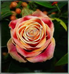Rose painted. ©UdoSm