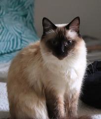 La petite chatte de mon fils Florian et de Flavie .