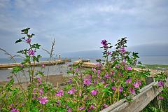 Harbour flowers (HFF everyone)