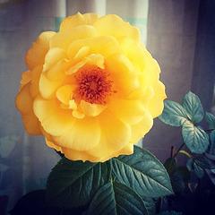 badezimmer-rose