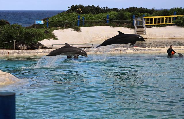 Sealife park Hawaii Waimanalo