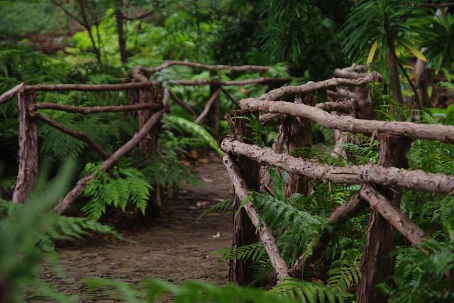 Le chemin vers le jardin caché