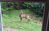 A garden visitor from couple of years ago