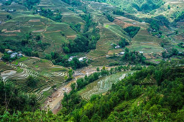 Vista over paddy fields