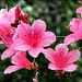 Bezaubernde Blüten