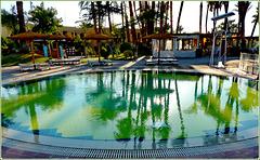 LUXOR : le palme colorano l'acqua di verde !