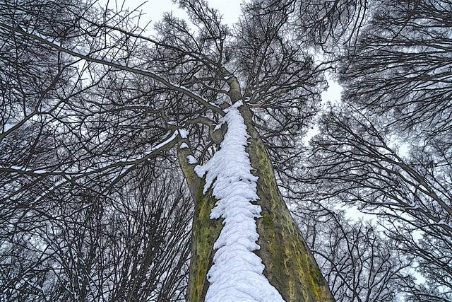 Das geheime Leben der Bäume - The hidden life of trees