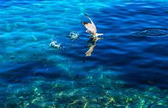 Por mar y por aire acuden a comer