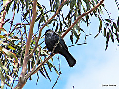 Tui High in a Tree