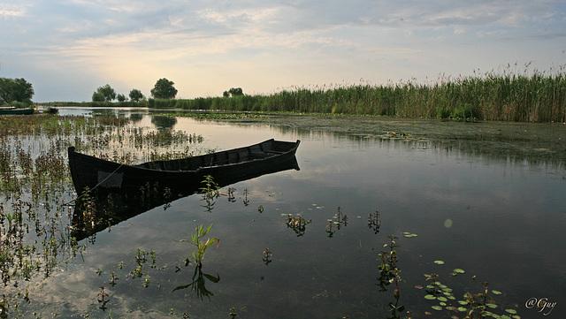 IMG 0847- Ambiance Delta