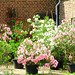 Oleander & Laurier Corner