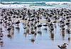 Taqah : i veri 'bagnanti' sulle spiagge dell' Oman