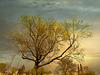 1 (50)...tree with sunrise