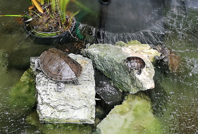 Turtles in the shower