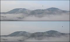 Brouillard matinal ... Une hirondelle passe